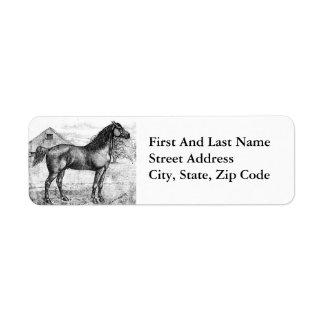 Morgan Horse Breed 1888 Vintage Drawing Art Label