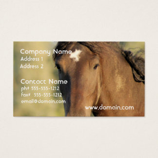 Morgan Horse Business Cards