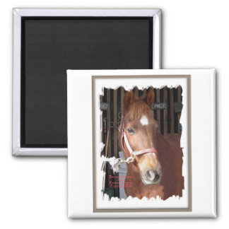 Morgan Horse Happy Magnet