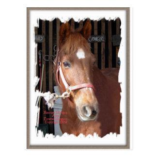 Morgan Horse Happy Postcard