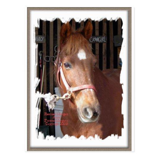 Morgan Horse Happy Post Cards