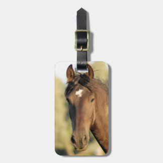 Morgan Horse Luggage Tag