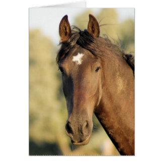 Morgan Horse Note Card