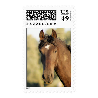 Morgan Horse Postage Stamp