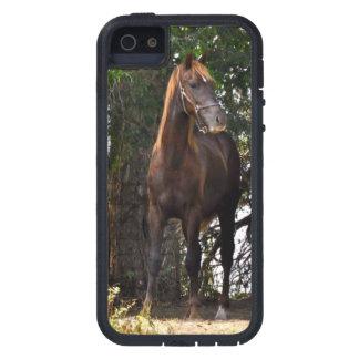 Morgan Horse Tough Cell Phone Case iPhone 5 Case