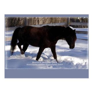 Morgan Horse Winter Wonderland Blank Postcard