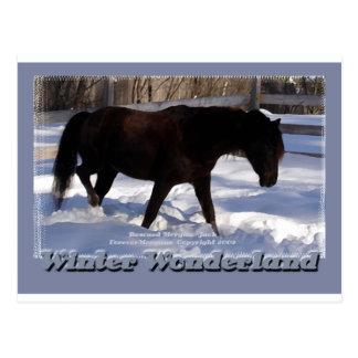 Morgan Horse Winter Wonderland Postcard