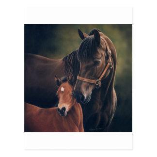 Morgan Mare and Foal Postcard