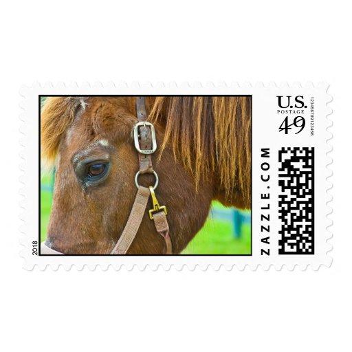 Morgan Stamps