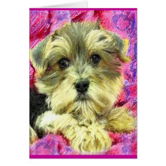 morkie puppy card