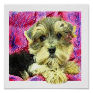 morkie puppy poster