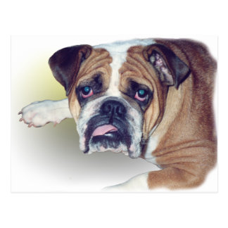 Morning After bulldog Postcard