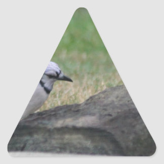 Morning Blue Jay Triangle Sticker