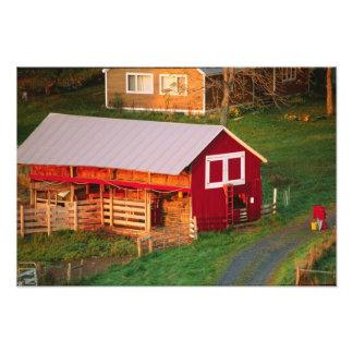 Morning chores on the farm. USA, Vermont, Photo Print