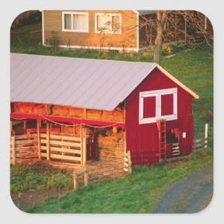 Morning chores on the farm. USA, Vermont, Square Sticker