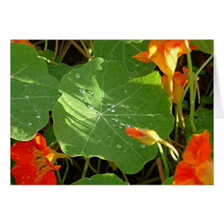 """Morning Dew Clings to Nasturtiums"" Greeting Card"
