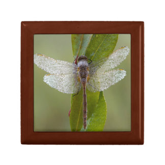 Morning dew Dragonfly keepsake box