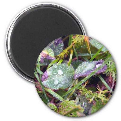 Morning Dew Fridge Magnet