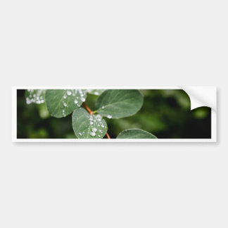 Morning dew in garden bumper sticker