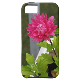 Morning Dew iPhone SE/5/5s Case
