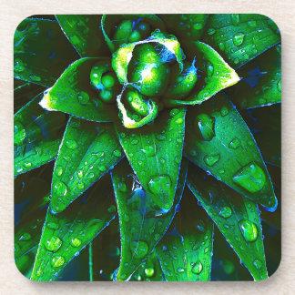 Morning Dew On Plant Beverage Coaster