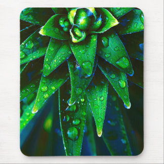 Morning Dew On Plant Mouse Pad