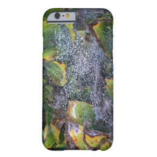 Morning Dew On Spider Web Barely There iPhone 6 Case