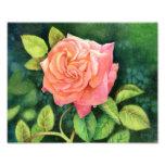 Morning Dew Rose - Floral Art Print Art Photo