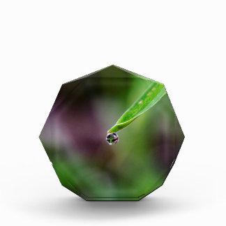 Morning Dew Water Droplet Award