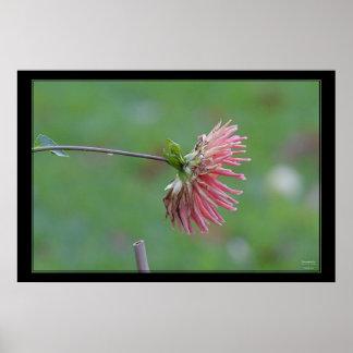 Morning Flower Print