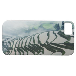 Morning Fog Above Rice Fields iPhone SE/5/5s Case