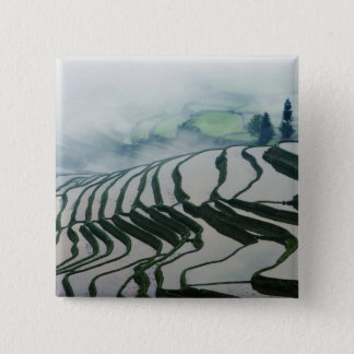 Morning Fog Above Rice Fields Pinback Button