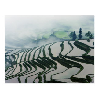 Morning Fog Above Rice Fields Postcard