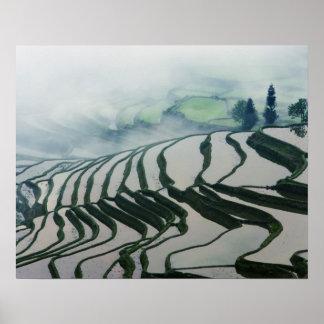 Morning Fog Above Rice Fields Poster