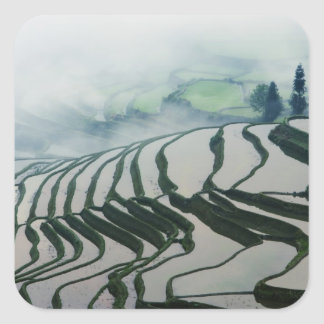 Morning Fog Above Rice Fields Square Sticker
