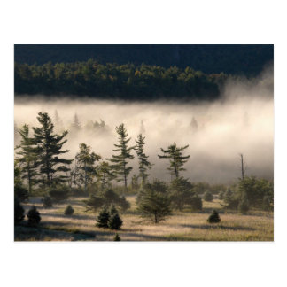 Morning Fog in the Adirondacks 4 Post Cards