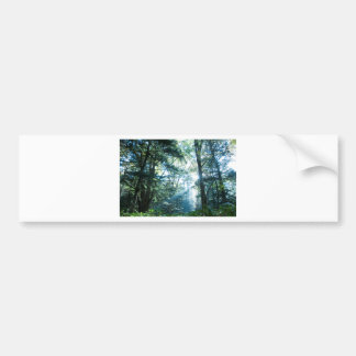 Morning forest bumper sticker