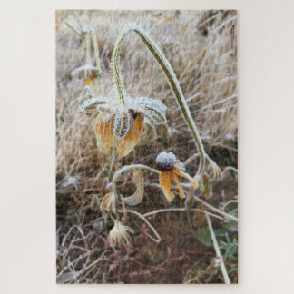 Morning Frost on Wilted Rudbeckia Jigsaw Puzzle
