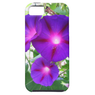 Morning glories iPhone SE/5/5s case