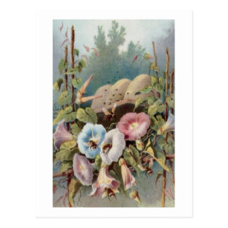 Morning Glories Post Cards