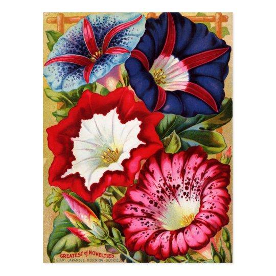 Morning Glories Postcard