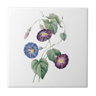 Morning Glories Redoute Ceramic Tile