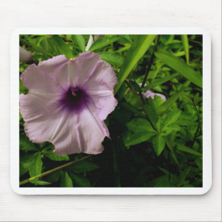 Morning Glory1 Mouse Pad