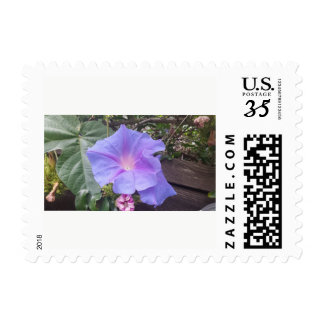 "Morning Glory 1.8"" x 1.3"" Postage"