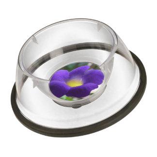 morning-glory-2 pet bowl