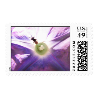 Morning Glory and Bee Postage Stamps