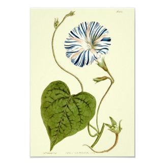 Morning Glory Blue Illustration Card