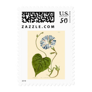 Morning Glory Blue Illustration Postage