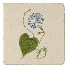 Morning Glory Blue Illustration Trivet