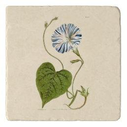 Morning Glory Blue Illustration Trivet